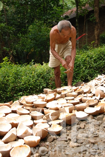 Coconuts;Cutting;Drying;Man;Men;agriculture