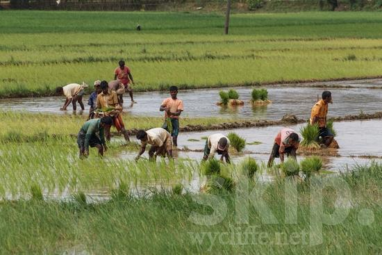 Agriculture;Asia;Asian;Asien;Bangladeche;Bangladesch;Bangladesh;Bangladeshi;COUNTRY;Farmer;L'Asie;Man;Rural;Village;agriculteur;agricultor;agricultora;agricultrice;agricultura;aldea;aldeia;asiatique;asiática;asiático;granjera;granjero;hombre;homem;homme;Ásia;Азия;Бангладеш;アジア人;亚洲;亞洲人;孟加拉;村;村落;田舎;男人;男性;農夫;農業;郊區;방글라데시;아시아