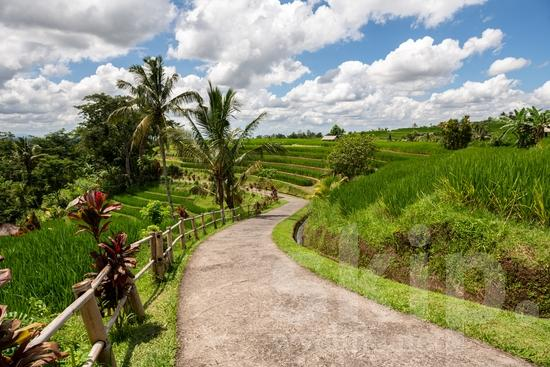 Agriculture;PLACE;Rice Field;Rural;Scenic;agricultor;agricultora;agricultura;cênica;cênico;escénica;escénico;pittoresque;名所;田舎;農業;郊區;風景