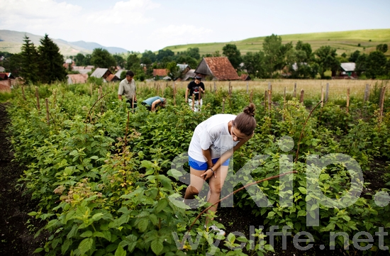 Europe;Farming;Girl;Other Keywords;People;Romania;Romanian;Rural;agriculture;places