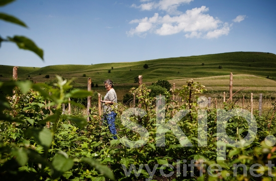 Europe;Farming;Other Keywords;People;Romania;Romanian;Rural;Woman;agriculture;places