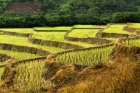 Lahu;Thailand;agriculture;rice