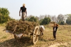 Agriculture;Asia;Asian;Asien;B