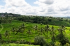Agriculture;PLACE;Rice-Field;R
