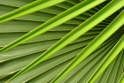 Leaves;Green;Plant