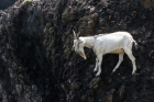 COUNTRY;Cliff;Goat;Island;Rock