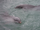 ocean;dophin;smiling;dolphins;