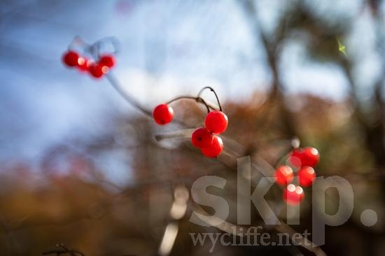 Asia;Japan;berries