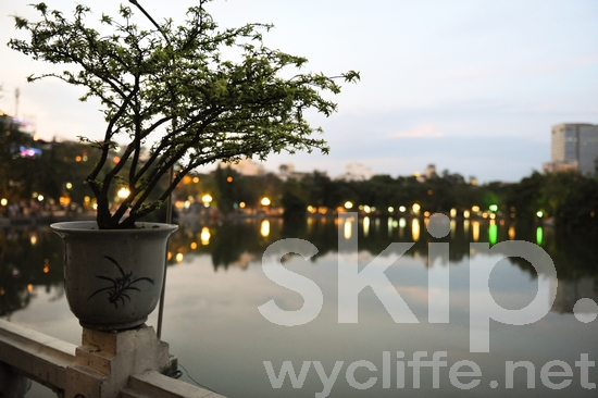 Pot;Plant;Dusk;Lights;Pond;Reflect;City