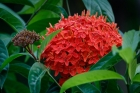 Asia;Asien;COUNTRY;Flower;Inde