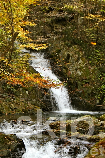 Water fall;river;stream;tributary;fall leaves;autumn color;rocks;moss;yellow color;紅葉;秋;滝;水;河原;渓流;水源;黄色