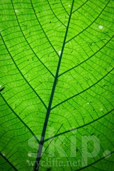 Central America;Costa Rica;leaf;plant;scenic photography