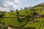 Agriculture;Asia;Asien;COUNTRY
