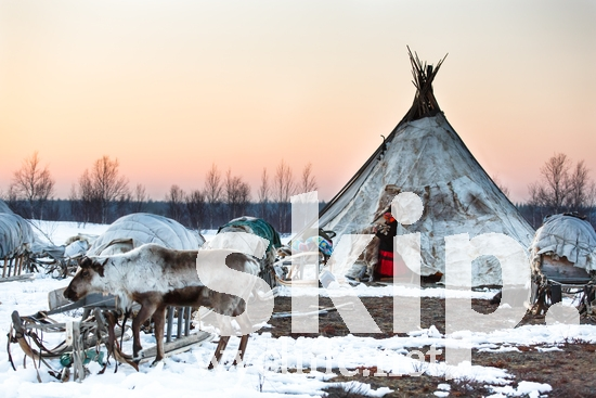 Russia;Siberia;choom;reindeer;sled;snow