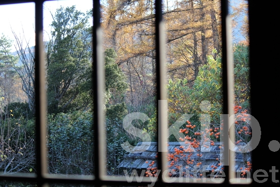 Latticed window;scenery;trees;persimmon trees;country side;traditional Japanese house;格子窓;田舎;景色;柿の木
